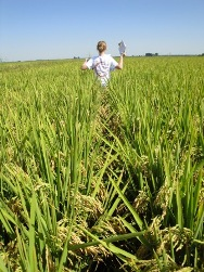 Copy of Cindy walking through rice - join the lab